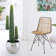 Kunstpflanze Kaktus