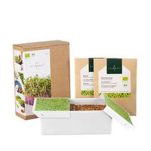 Microgreens Schale mit Starter-Kit