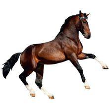 Wandsticker Pferd, 67 x 47 cm braun
