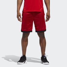 adidas Performance Shorts »Sport Mesh Shorts«
