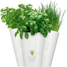 """Emsa Trio Übertopf """"Fresh Herbs"""" mit Bewässerungssystem frische Kräuter weiß  Erwachsene"""